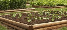 (Permaculture) Use Cover Crops/Green Manure to Enrich Soil: Legume family (field peas, soybeans, alfalfa, clover) add nitrogen to the soil. Grasses & other plants (oats, buckwheat, rye) add organic matter ... winter hardy, should be planted in fall.