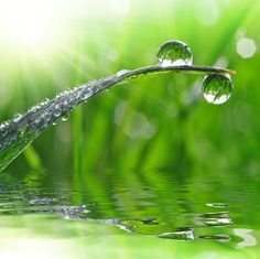 Find out the latest sprinkler design trends from a top McKinney sprinkler repair company Sprinkler Repair, Forest Mountain, Dew Drops, Nature Tree, Tree Forest, Leiden, Showroom, Design Trends, Grass