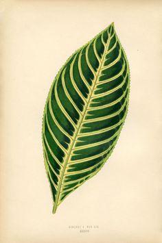 Leaf-Printable-Image-GraphicsFairysm.jpg 1,061×1,600 pixels
