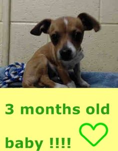 PUPPY NEEDS PLEDGES AND RESCUE! A4804295 My name is Rocko and I'm an approximately 3 month old male chihuahua sh. I am not yet neutered. I have been at the Downey Animal Care Center since February 28, 2015. I will be available on March 2, 2015. You can visit me at my temporary home at DRECEIVING. https://www.facebook.com/photo.php?fbid=825404917539842&set=pb.100002110236304.-2207520000.1425229946.&type=3&theater