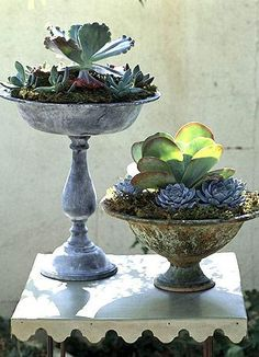 Click pic for 35 Container Gardeing Ideas - Vintage Compotes | DIY Spring Garden Projects