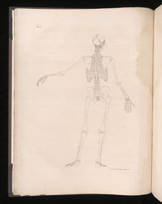 14 from Tables of the skeleton and muscles of the human body · Albinus, Bernhard Siegfried, 1697-1770 · 1749 · Historical Collections and Services at the Claude Moore Health Sciences Library, University of Virginia.