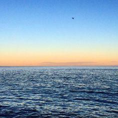 Sunset last night. #lakesuperior #captureminnesota #onlyinmn #minnstagramers #minnstagram #mnsunset #minnesota #seagull #swinglesonsuperior by 1girl2boys