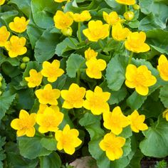 5 Natives for Damp Soil Choose plants that thrive in wet and waterlogged sites, and they'll need very little care or attention.