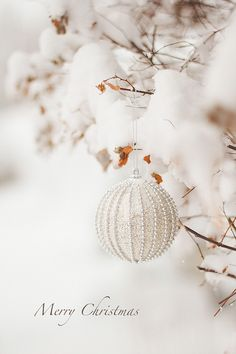 CHRISTMAS WHITE...❤