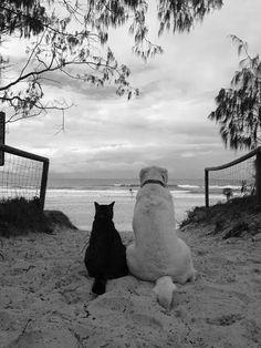 Black Cat & White ... Dog :)