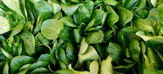 Roszponka – uprawa, właściwości, przepisy