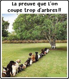 La preuve que l'on coupe trop d'arbres !! #ecologie #écologie #image #images #photo #photo