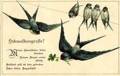 paintings of swallows | Vintage Bird Images - Swallows on Line - The Graphics Fairy