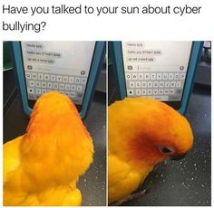 I hate birds but that's adorable