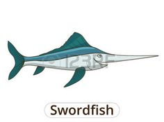 plongée sous marine dessin: Swordfish underwater animal cartoon vector illustration for children Illustration