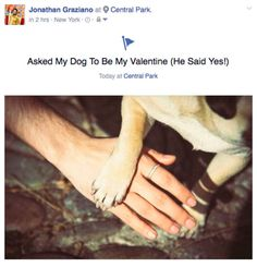 Graziano even went as far as to make it Facebook official, proclaiming Noodle as his valentine. | This Guy Made His Pug His Valentine In An Adorable Photo Shoot