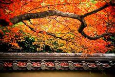 養徳院:境内の紅葉