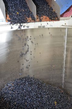 Destemmed Pinot Noir is so exciting for winemakers in Oregon.