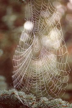I pinned this because Charlotte might be looking at different ways to design her webs. As a spider, she will be looking at ways to continue to help Wilber save his life. Spider Art, Spider Webs, Itsy Bitsy Spider, Charlottes Web, Patterns In Nature, Amazing Spider, Sculpture, Natural World, Macro Photography