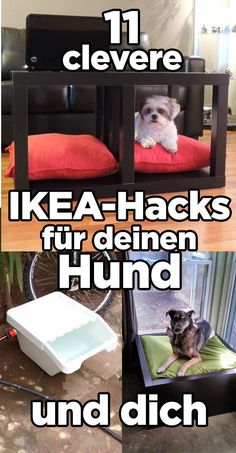 """11 clever Ikea hacks, in which all dog people say: """"I have to imitate this immediately!"""" - 11 clever Ikea hacks, in which all dog people say: """"I have to imitate this immediately! All Dogs, Dogs And Puppies, Ikea Hacks, Young Animal, Training Your Puppy, Baby Kittens, Dog Hacks, Dog Owners, Pet Care"""