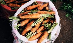 How to Store Carrots for Winter. Store Carrots in your Refrigerator. Super simple way to have garden fresh carrots all winter long! Fresh Vegetables, Fruits And Veggies, Agriculture Raisonnée, Health Benefits Of Carrots, Ginger Soup Recipe, Pickled Carrots, Quick Appetizers, Veggie Recipes, Cooking Recipes