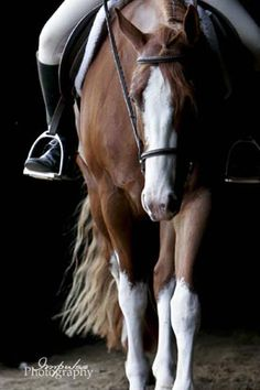This looks so much like my GiGi pony it's not even funny. Equine Photos by Impulse Photography - Mallory Beinborn.