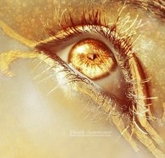 imagine if gold was a real eye colour?
