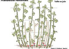 Wonderful Types Of Urban Gardening Ideas. Sensational Types Of Urban Gardening Ideas. Forest Garden, Garden Art, Garden Design, Potager Garden, Balcony Garden, Organic Gardening, Gardening Tips, Easy Garden, Green Life