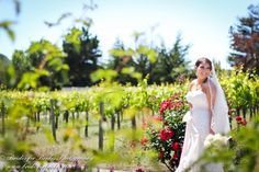 A beautiful bride during a June wedding. This year, the vines are already taller than her!  Plan your wedding at Chateau Julien!  http://www.chateaujulien.com/meeting-events-venues/planning-your-event