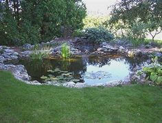 backyard-ponds-2-large-backyard-pond-816-x-624.jpg 480×367 pixels