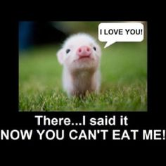 Pig lover unite! <3