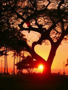 Heart shaped trees
