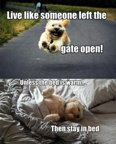 Live like someone left the gate open...