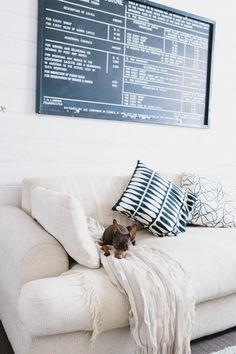 The Real Reason We Love House Tours So Much: Pets + Furniture | Apartment Therapy
