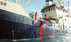 Norway whale catch reaches highest number since 1993