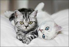 eeeeeeeeeeeeeeep!!!!!!! so cute!!!!