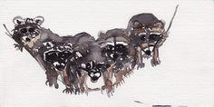 Waschbären, racoons, watercolour