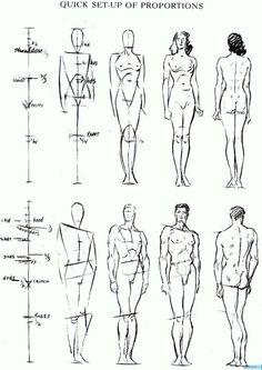 Рисуем пропорции человеческой фигуры: Как рисовать тело человека в правильных пропорциях по шагам >> Библиотека рисования по шагам