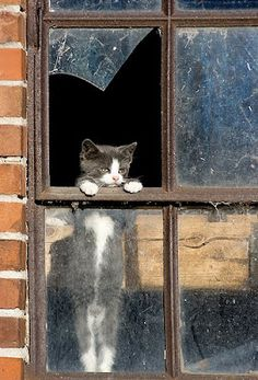 Window kitten.