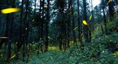Photos: Farmers in Mexico are giving firefly tours to preserve their forests