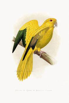Попугаи WT Greene Parrot Prints 1884 America. Обсуждение на LiveInternet - Российский Сервис Онлайн-Дневников