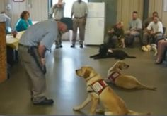 Meet The First Class of Service Dogs To Graduate From Inmate Training Program - American Kennel Club