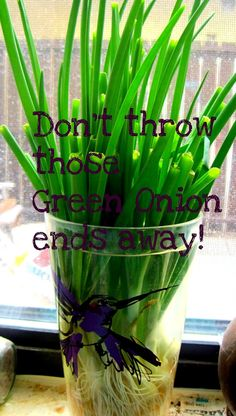green onions in a glass of water
