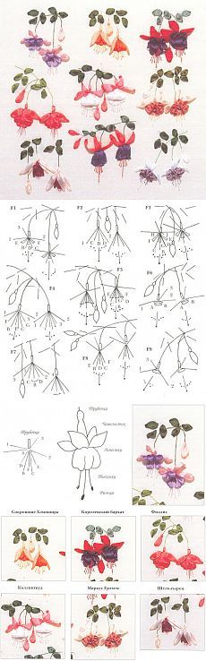 Fuchsia, dessin et broderie