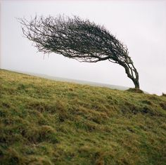 Tree ~*Verdandii     POWERFULLY JUMP START YOUR VEHICLE!!! Click http://www.amazon.com/gp/product/B00RZ1TKYE