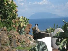 Alicudi: the donkey-Transportation in this island of the Aeolian archipelago