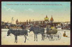 OLD ORCHARD BEACH, ME, PEANUTINE WAGON & FOREST PIER HOTEL, DONKEYS ~ used 1915.           Propiedad y cortesía de Archivos Rodríguez LLC, archivofotograficodepuertorico.com