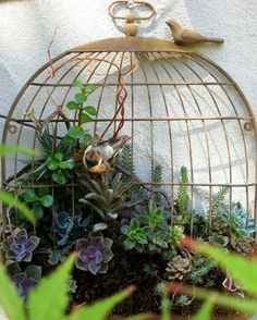 Succulents in a wall mounted birdcage. I have a birdcage like this..been trying to figure out what to do with it!