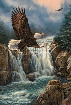 Shop from over 40 pieces of eagle art from Wild Wings and instill a sense of majesty and wildness into your home with an image of these incredible birds. Eagle Images, Eagle Pictures, Beautiful Birds, Animals Beautiful, Photo Aigle, Aigle Animal, Eagle Wallpaper, Eagle Painting, Eagle Art