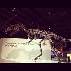 Instagram / lynettebeckstro: paleontology hall #hmns