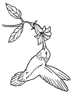 Hummingbird embroidery pattern