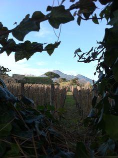Mt. Vesuvius. By Hayley