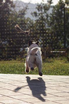 JUMPING LIKE A CRICKET