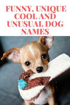 Dog Names Popular Male And Female Dog Names Unusual Dog Names
